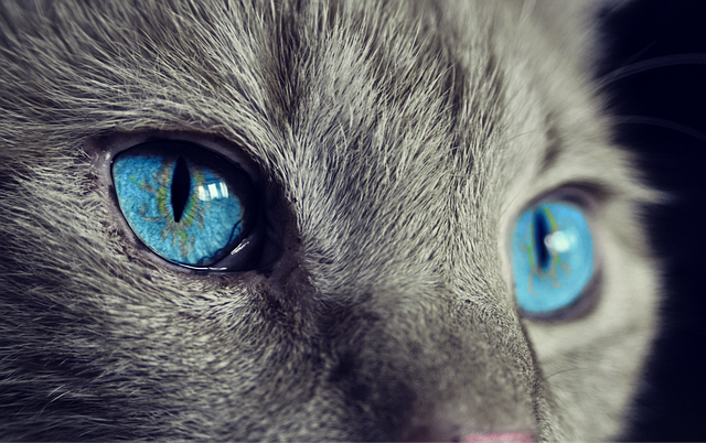 cat-1285634_640